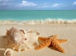 sea-shells-and-starfish[1]